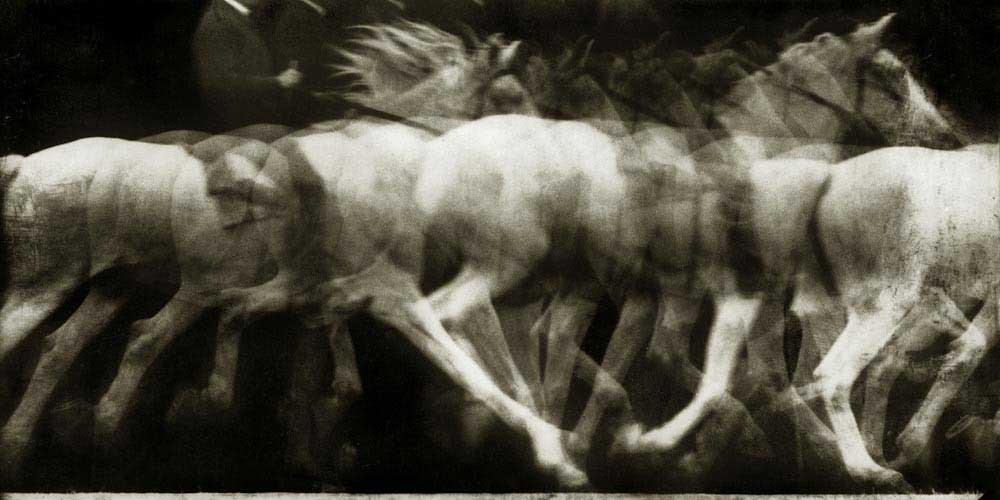 Chronophotographie, décomposition mouvement d'un cheval